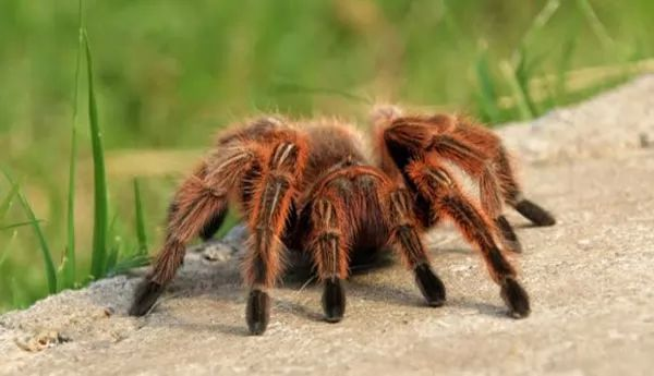 10 مخلوقات قاتلة قد تساعدك على الشفاء -killer-creatures-that-are-actually-helping-heal_10980_6_1549698349