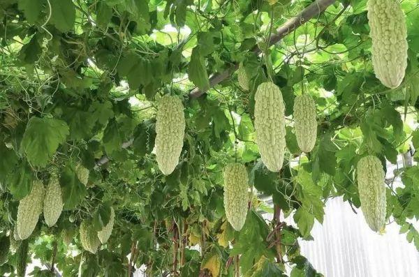 العلاج بالطبيعة 2019_8 فوائد البطيخ