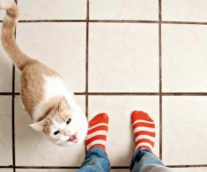 قد تجد نفسك مندهشا عندما تعلم أن العديد من الحقائق التي سمعتها عن القطط غير صحيحة حقا، فلا تقع هذه الأساطير والمفاهيم الخاطئة على القطط، وهذه القائمة ...