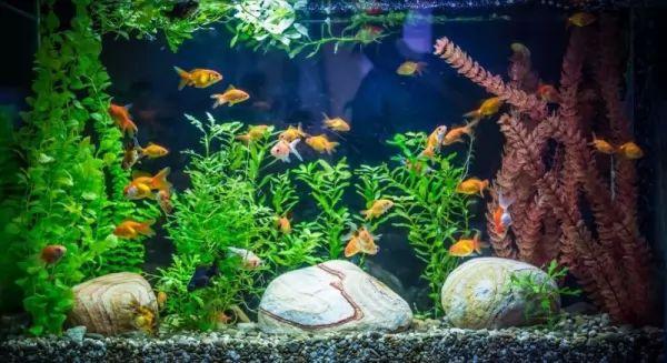 أعراض إرتفاع درجة الحموضة في حوض السمك Aquarium-ph_11230_1_1563837772