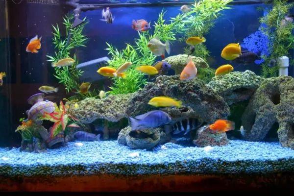 أعراض إرتفاع درجة الحموضة في حوض السمك Aquarium-ph_11230_2_1563837773