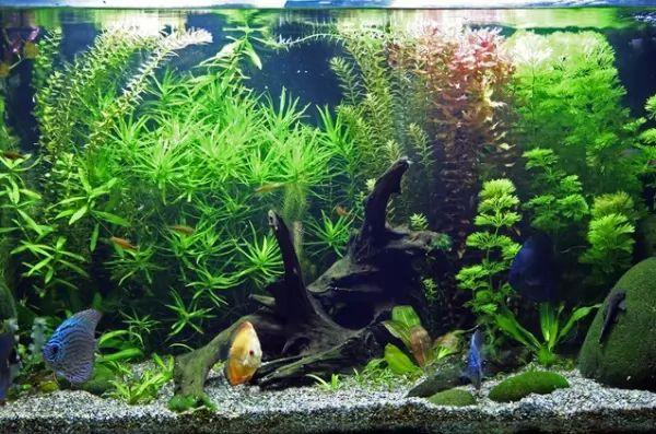 أعراض إرتفاع درجة الحموضة في حوض السمك Aquarium-ph_11230_3_1563837774