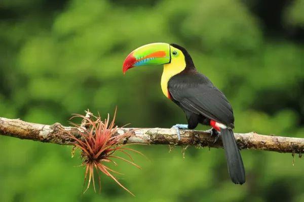 هل طائر الطوقان مهدد بخطر الإنقراض ؟