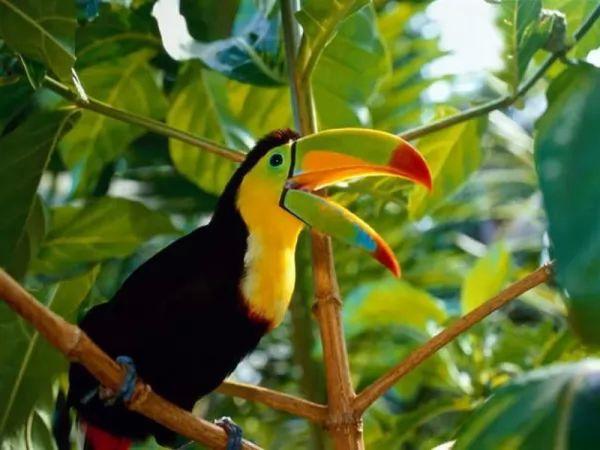 معلومات عن حياة طائر الطوقان