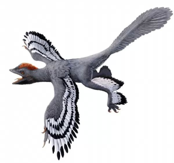 كيف تطورت الطيور منذ 150 مليون عام