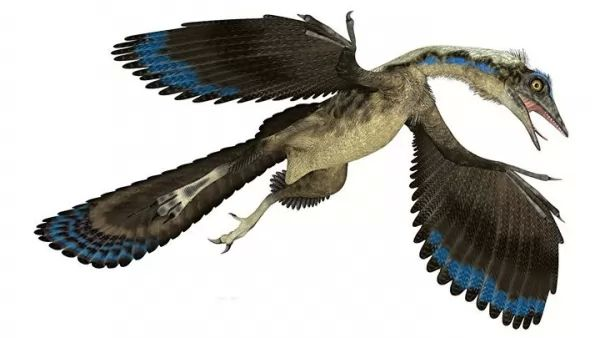 الطيور العملاقة وتطورها