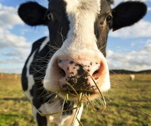 الحيوانات العاشبة هي الحيوانات التي تكيفت لتأكل الكائنات الحية التي يمكن أن تنتج طعامها ذاتيا من خلال الضوء والماء، أو المواد الكيميائية مثل ثاني ...