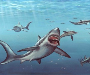 كان قرش ميجالودون أكبر قرش ما قبل التاريخ عاش من أي وقت مضى، كما هو موضح بالصور والرسومات التوضيحية أدناه، وكان هذا القرش الكبير الموجود تحت سطح ...