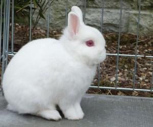 كل عام تصبح الكثير من سلالات الأرانب أكثر وأكثر شعبية كحيوانات أليفة، وليس فقط الأرانب ذكية للغاية وسهلة التدريب، إلا أنها يمكن تعليمها كيفية إستخدام ...