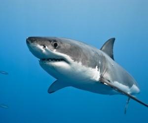 على الرغم من أنه من المحتمل أن تموت من ضربة صاعقة أو هجوم تمساح أو من خلال إصطدام بدراجة أكثر من تعرضك لهجوم من سمك القرش، إلا أن سمك القرش يلدغ ...