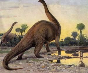 نعلم جميعا أن الديناصورات قد إختفت عن سطح الأرض قبل 65 مليون عام، وهو إنقراض جماعي لا يزال قائما في الخيال الشعبي، وكيف يمكن لهذه المخلوقات الضخمة ...