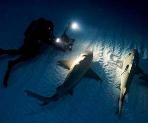 تحتاج أسماك القرش إلى إبقاء الماء يتحرك فوق خياشيمها حتى تتلقى الأكسجين، وكان يعتقد لفترة طويلة أن أسماك القرش بحاجة إلى التحرك بإستمرار من أجل ...