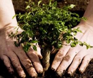 غالبا ما يحتاج أصحاب المنازل إلى نقل الأشجار أو زرعها داخل الفناء، وقد تكون الأشجار مزروعة بشكل كثيف أو تهدد من خلال المساحة المتوفرة، والحجم هو عامل ...