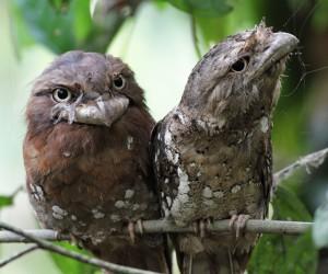 تبدو الببغاوات والطاووس من الحيوانات الأليفة التي يمكن ترويضها مقارنة بهذه الطيور الغريبة، وهنا سوف نتحدث في قائمتنا عن الطيور الغريبة والمراوغة في ...