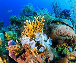 الشعب المرجانية هي مركز للتنوع البيولوجي، حيث ستجد العديد من أنواع الأسماك واللافقاريات والحياة البحرية الأخرى، ولكن هل تعلم أن الشعاب المرجانية حية ...