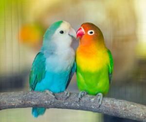 إذا كنت تفكر في إحضار بعض الطيور الأليفة إلى منزلك، فتأكد من مراعاة هذه الأسئلة، أولا، فهل تفكر في الحصول على الطيور الأليفة؟ لن تكون بمفردك، فهناك ...