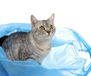 القطط مخلوقات صغيرة غريبة ولديها الكثير من الأسرار، بالإضافة إلى أن القطط هي النوع الوحيد المستأنس في عائلة السنوريات، وتتمتع القطط المحلية بسمعة ...