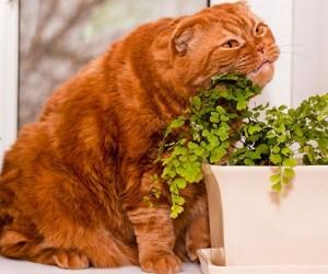 القطط فضولية بشكل غريب وسوف تلعب القطط بأي شيء إذا تم إسقاطه، فتجده القطط وتعتقد أنها أفضل لعبة على الإطلاق، وعادة ما يكون ذلك ممتعا للمشاهدة حقا ...