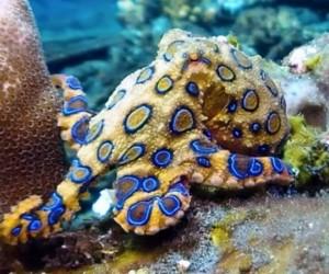 يغطي البحر 70٪ من سطح العالم، وهو موطن لبعض من أكثر الحيوانات غرابة وغموضا على الكوكب، كما أنه موطن لأخطر الكائنات البحرية، وبالرغم من أن البشر لا ...