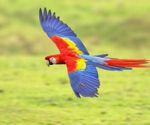 بالنسبة للعديد من الأشخاص، فإن أول ما يجذبهم إلى مملكة الطيور هو ريش الببغاء الملون، وسواء كنت تبحث عن ببغاء أحمر أو أخضر أو أزرق أو أرجواني، إلا أن ...