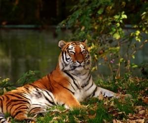 هناك الكثير من أسباب إنقراض الحيوانات على الأرض، فكوكب الأرض يعج بالحياة ويضم آلاف الأنواع من الحيوانات الفقارية (الثدييات والزواحف والأسماك ...
