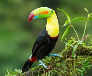 لدينا جولة حول أفضل وأغلى الطيور الأليفة في العالم، فهل تساءلت يوما عن أنواع الطيور الأليفة التي يحتفظ بها الأثرياء والمشاهير؟ فيعد اقتناء الطيور ...