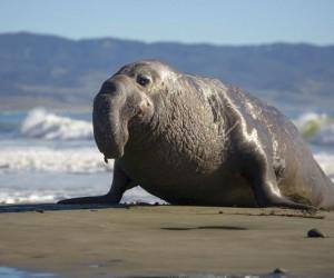 تحمل القارة القطبية الجنوبية لقب أبرد مكان على وجه الأرض، وتم العثور على أنواع قليلة فقط من حيوانات القطب الجنوبي أو أنتاركاتيكا بسبب الغطاء الجليدي ...