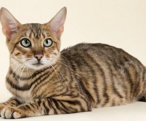 من بين جميع أنواع القطط هناك مجموعة من أجمل أنواع القطط والتي تحظى بشعبية كبيرة بين محبي القطط حول العالم، واليوم سنلقي نظرة سريعة على مجموعة من أجمل ...
