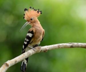 يعد طائر الهدهد أحد أكثر الطيور شهرة حوله، وذلك بفضل خطوطه الجريئة ومنقاره الطويل المنحني وغير التقليدي، وبمجرد النظر إليه، من السهل معرفة طائر ...