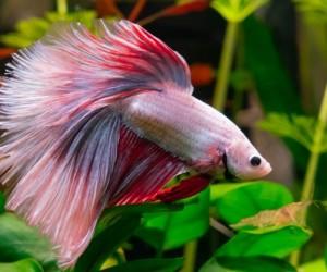 استكشف أنواع سمك الزينة المختلفة لحوض السمك في منزلك من صغير وكبير إلى سهل وصعب التربية، ونقدم مجموعة كبيرة ومتنوعة من أنواع سمك الزينة للمبتدئين