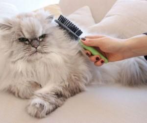 من المعروف أن شعر القطط يتساقط ويمكن أن يوجد في كل مكان، فهذا جزء طبيعي من حياتها، وقد تظهر القطط في الهواء الطلق تساقطا موسميا أكثر، لكن القطط التي ...