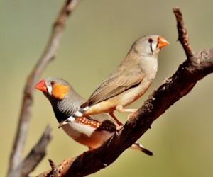 هناك العديد من أنواع الطيور، ولكن واحدة من أكثر أنواع الطيور شيوعا التي يتم الإحتفاظ بها كحيوان أليف هي طيور الزيبرا، وهذا النوع شديد التحمل ويسهل ...
