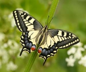 تعتبر الفراشات من أكثر أشكال الحشرات شيوعا وشعبية، ويرجع ذلك أساسا إلى مدى شيوعها في العثور عليها وهي تطير في حديقتهم بينما تمارس مجموعة كبيرة من ...