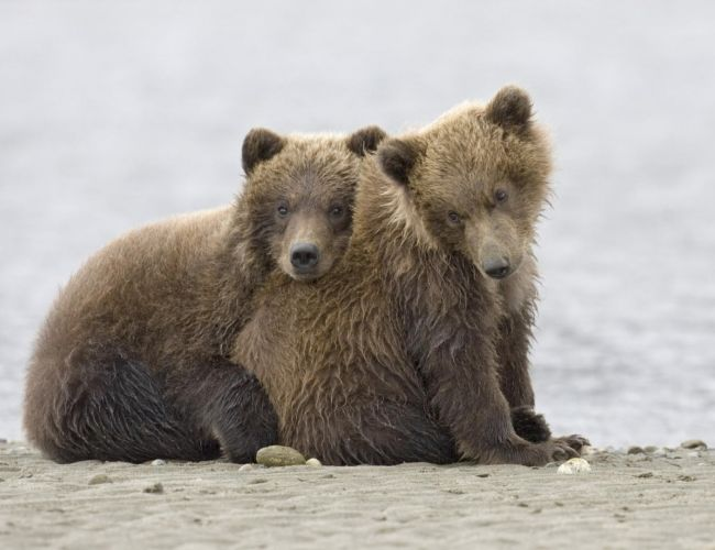 Картинки на телефон медвежата 15