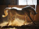 صور احصنة