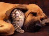 صور قطط وكلاب