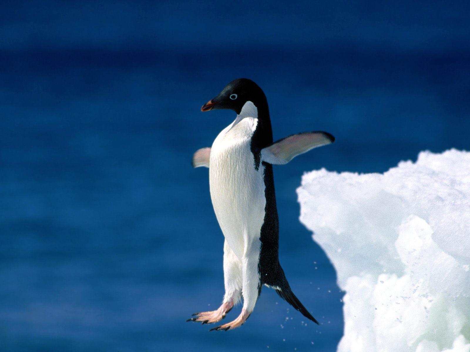 معلومات عن طائر البطريق الذى لا يستطيع الطيران لكنه سباح ماهر