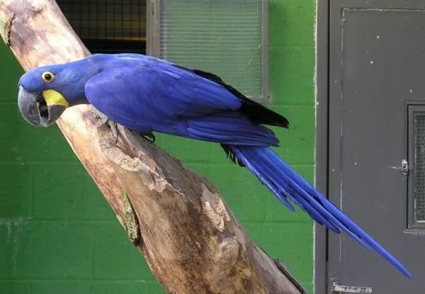 صور ومعلومات لاجمل الطيور فى العالم Large_1346841065
