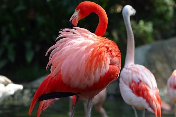 صور ومعلومات لاجمل الطيور فى العالم Large_1346841066