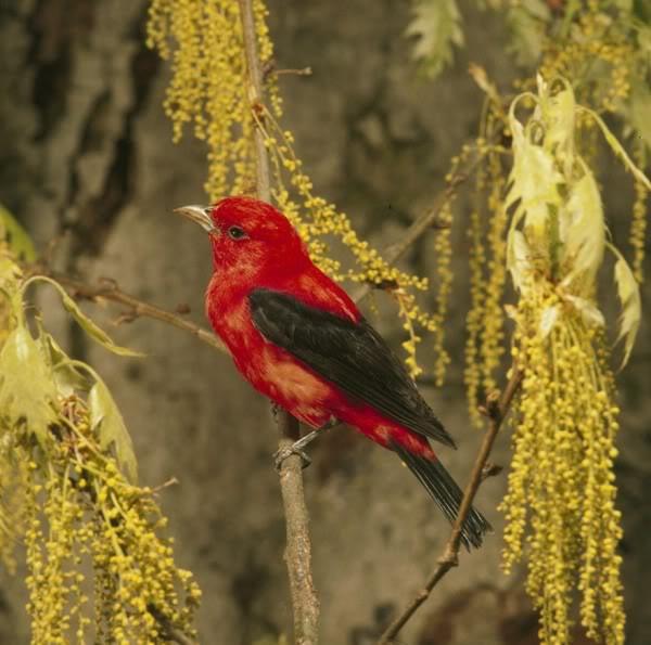 صور ومعلومات لاجمل الطيور فى العالم Large_1346841067