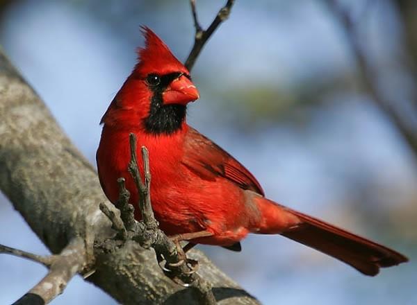 صور ومعلومات لاجمل الطيور فى العالم Large_1346841070