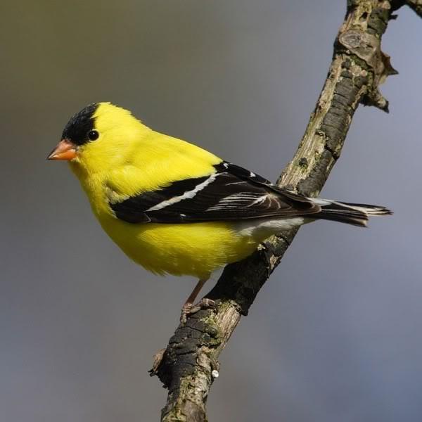 صور ومعلومات لاجمل الطيور فى العالم Large_1346841147