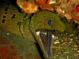 صور ثعبان البحر