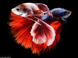 اجمل صور اسماك