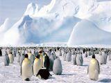 صور القطب الجنوبي